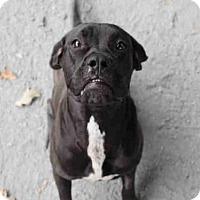 Adopt A Pet :: NACHO - Atlanta, GA