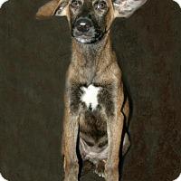 Adopt A Pet :: Fame - Lufkin, TX