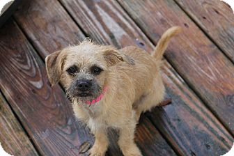 Pug/Terrier (Unknown Type, Small) Mix Puppy for adoption in Fort Atkinson, Wisconsin - Taffy