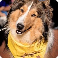 Adopt A Pet :: Fergus - Charlottesville, VA