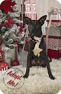 Labrador Retriever/Shepherd (Unknown Type) Mix Puppy for adoption in Gillsville, Georgia - Black Jack