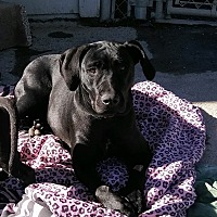 Adopt A Pet :: Eve - Santa Rosa, CA