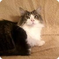 Adopt A Pet :: Lil' Hoss - Delmont, PA