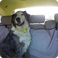 Adopt A Pet :: Lucy - Sarasota, FL