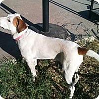 Adopt A Pet :: Lila - Gilbert, AZ