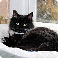Adopt A Pet :: Skeeter - Arlington, VA