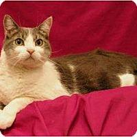 Adopt A Pet :: Tyler - Sacramento, CA