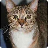 Adopt A Pet :: AC - Marietta, GA
