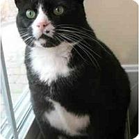 Adopt A Pet :: Stanley - Plainville, MA