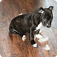Adopt A Pet :: Rio - Vidor, TX