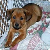 Adopt A Pet :: Charlotte - Minneola, FL