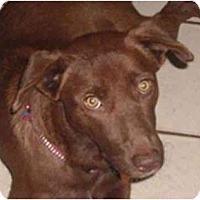 Adopt A Pet :: Anna - Orlando, FL
