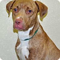 Adopt A Pet :: Jeter - Port Washington, NY