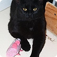 Adopt A Pet :: Spock - North Branford, CT