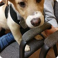 Adopt A Pet :: Jasper - Dearborn, MI