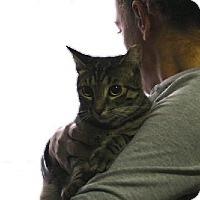 Adopt A Pet :: CHANCE - Ridgewood, NY