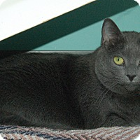 Adopt A Pet :: Nicky - Fairfax, VA