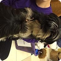 Adopt A Pet :: Socks - Richmond, VA