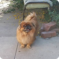 Adopt A Pet :: Lucas - SO CALIF, CA