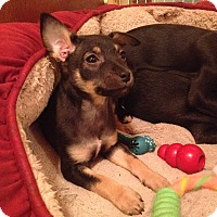 Adopt A Pet :: Tillie - Adoption Pending - Gig Harbor, WA