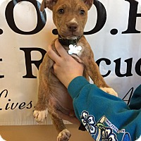 Adopt A Pet :: Sequoia - Woodward, OK