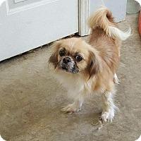 Adopt A Pet :: Callie - Hazard, KY
