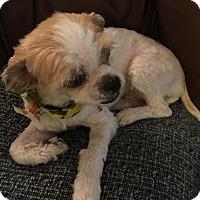 Adopt A Pet :: Oliver - Lodi, CA