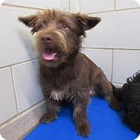Adopt A Pet :: Charlie (Clive)  $20 - North Richland Hills, TX