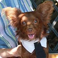 Adopt A Pet :: Simon - Garfield Heights, OH
