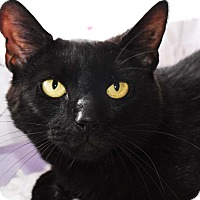 Adopt A Pet :: Tamara - Bristol, CT