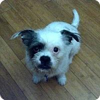 Adopt A Pet :: Dottie - Simi Valley, CA