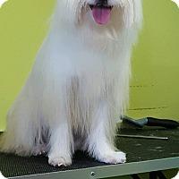 Adopt A Pet :: Bobbi - Ocean Ridge, FL