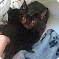 Adopt A Pet :: Jersey - Toronto, ON