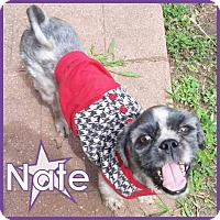Adopt A Pet :: Nate - Excelsior, MN