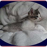 Adopt A Pet :: Honor - Mt. Prospect, IL