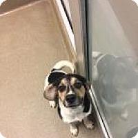 Adopt A Pet :: Odie 1607 - Columbus, GA