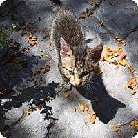 Adopt A Pet :: Everett- Adoption Pending - Manhattan, KS