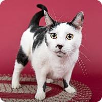 Adopt A Pet :: Lincoln - Wilmington, DE