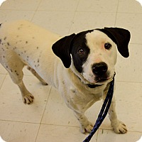 Adopt A Pet :: Chester - Pittsburg, KS