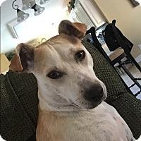 Adopt A Pet :: Missy - CRANSTON, RI