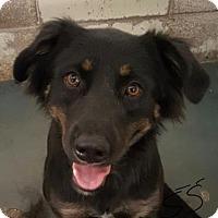 Adopt A Pet :: Telulah - Fort Smith, AR