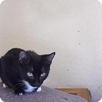 Adopt A Pet :: Tyler - el mirage, AZ