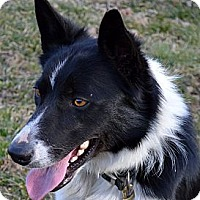 "Adopt A Pet :: Jessie James ""I'm Adopted"" - Minerva, OH"