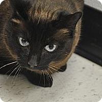 Adopt A Pet :: Kahlua - Foothill Ranch, CA