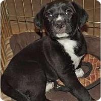 Adopt A Pet :: Julian - Phoenix, AZ