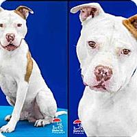 Adopt A Pet :: Solo - Cheyenne, WY