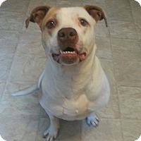 Adopt A Pet :: Ares - Lima, OH