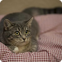 Adopt A Pet :: Evangeline - Fountain Hills, AZ