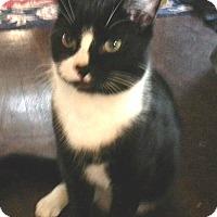 Adopt A Pet :: Tucker - Colmar, PA