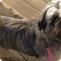 Adopt A Pet :: Oscar (courtesy listing) - Richmond, VA